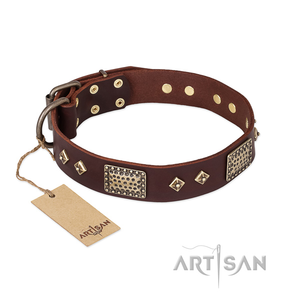 Incredible leather dog collar for daily walking