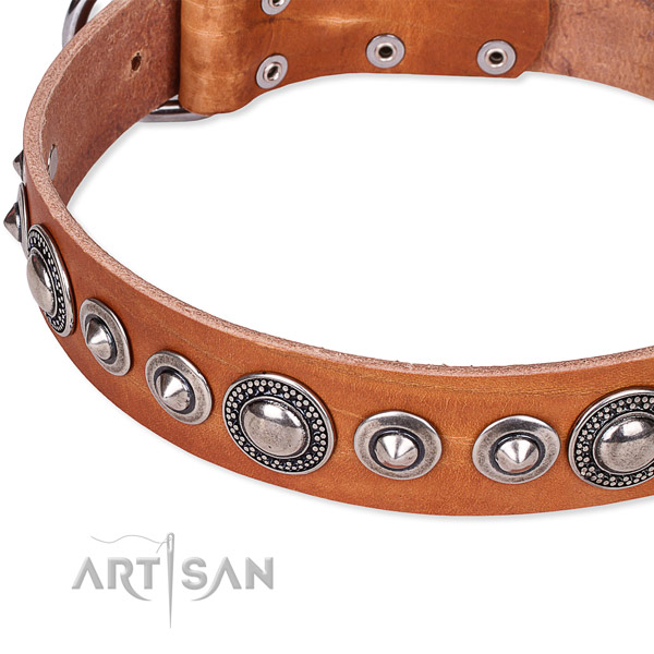 Everyday walking embellished dog collar of strong full grain leather