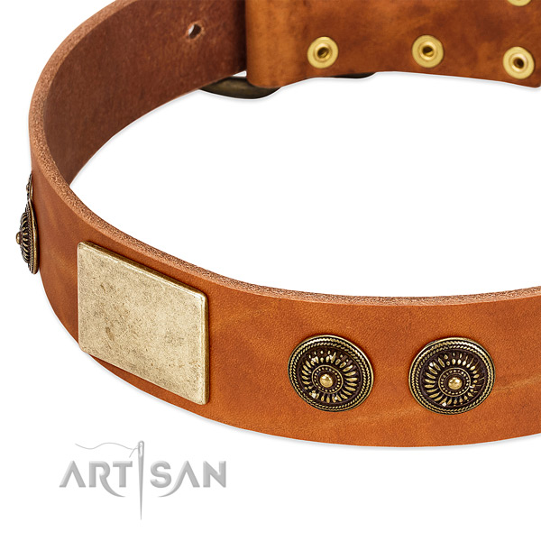 Comfortable dog collar made for your handsome doggie