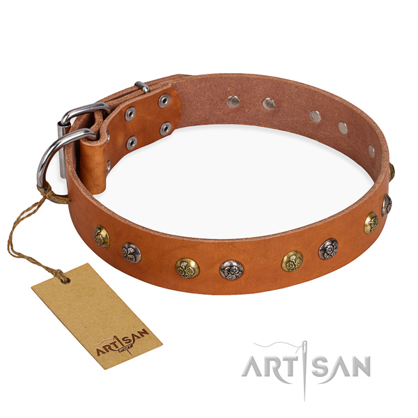 Everyday use embellished dog collar with reliable buckle