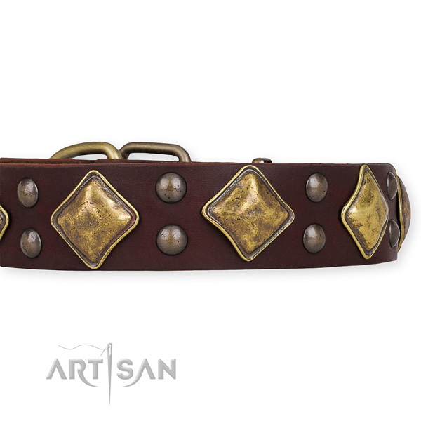 Full grain leather dog collar with fashionable corrosion resistant embellishments