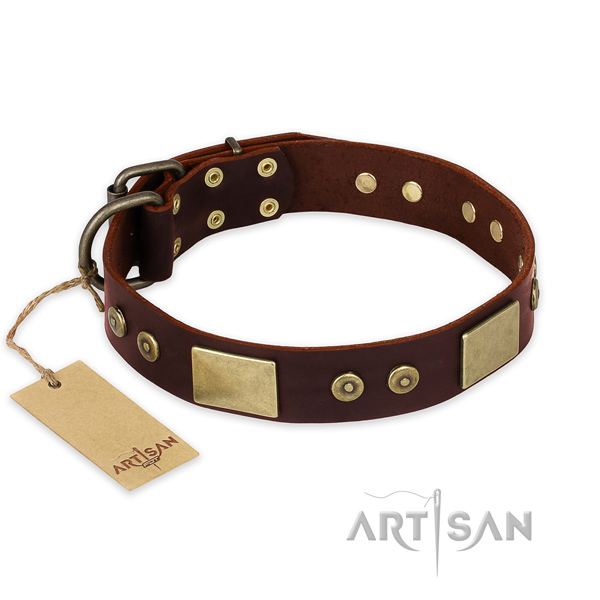 Stunning full grain leather dog collar for everyday walking
