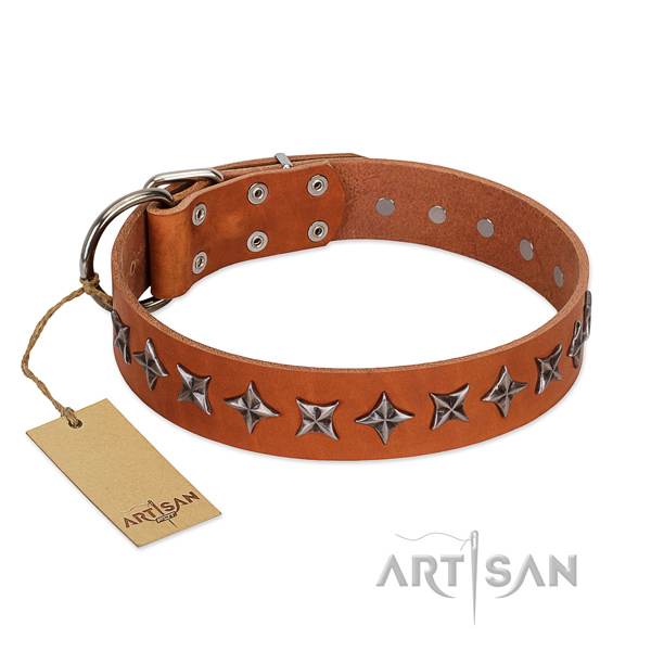 Everyday walking dog collar of high quality full grain leather with embellishments