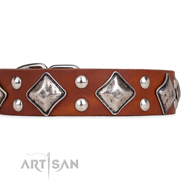 Full grain natural leather dog collar with significant strong studs