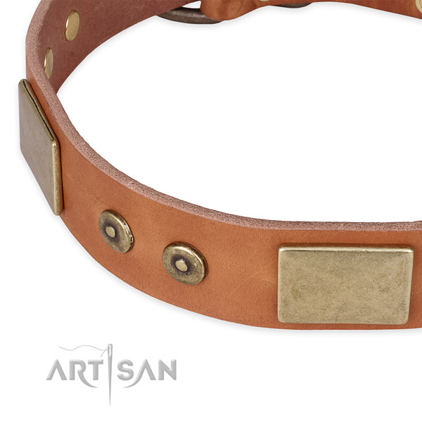 Rust-proof adornments on full grain leather dog collar for your four-legged friend