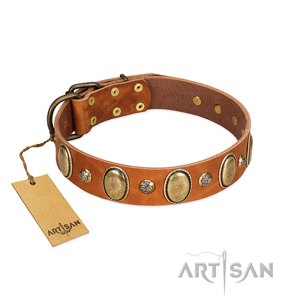 Natural leather dog collar of quality material with stylish adornments