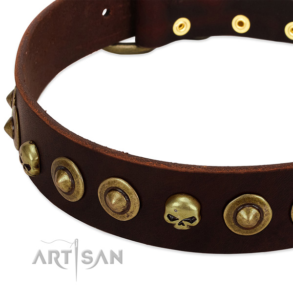 Stunning studs on natural leather collar for your pet