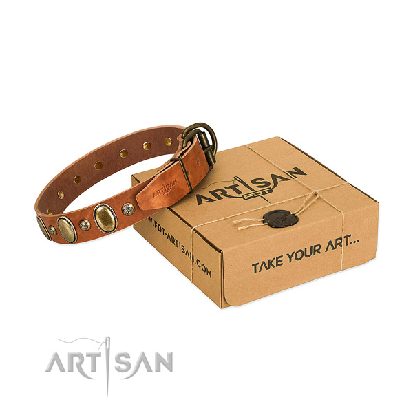 Trendy full grain leather dog collar with corrosion resistant fittings