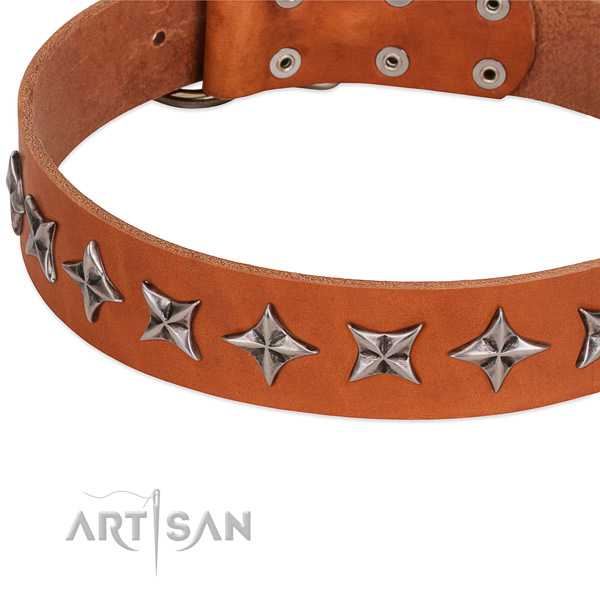Everyday walking studded dog collar of top notch full grain genuine leather