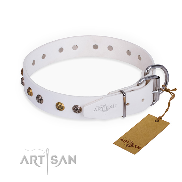 Full grain leather dog collar with stunning corrosion proof studs