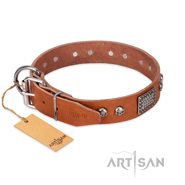 Rust resistant buckle on everyday walking dog collar