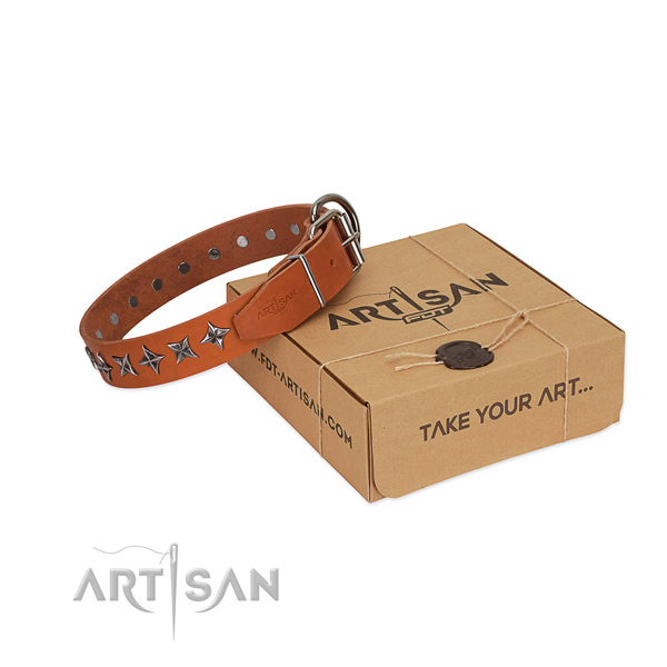 Everyday walking dog collar of quality natural leather with decorations