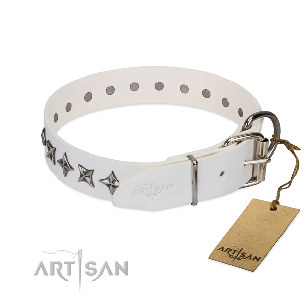 Reliable leather dog collar with fashionable embellishments