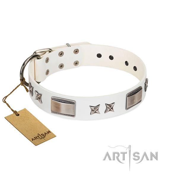 Studded dog collar of leather