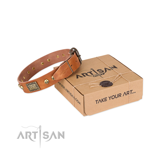 Rust resistant traditional buckle on dog collar for everyday walking