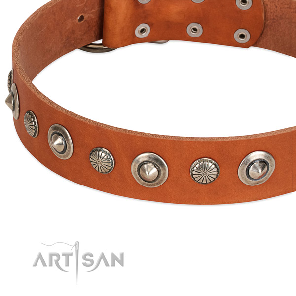 Leather collar with corrosion resistant fittings for your impressive dog