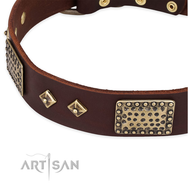Reliable embellishments on full grain leather dog collar for your canine