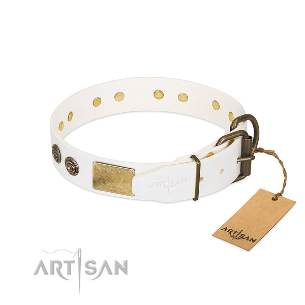 Durable fittings on full grain natural leather collar for fancy walking your four-legged friend