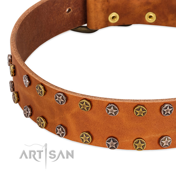 Everyday walking leather dog collar with fashionable adornments