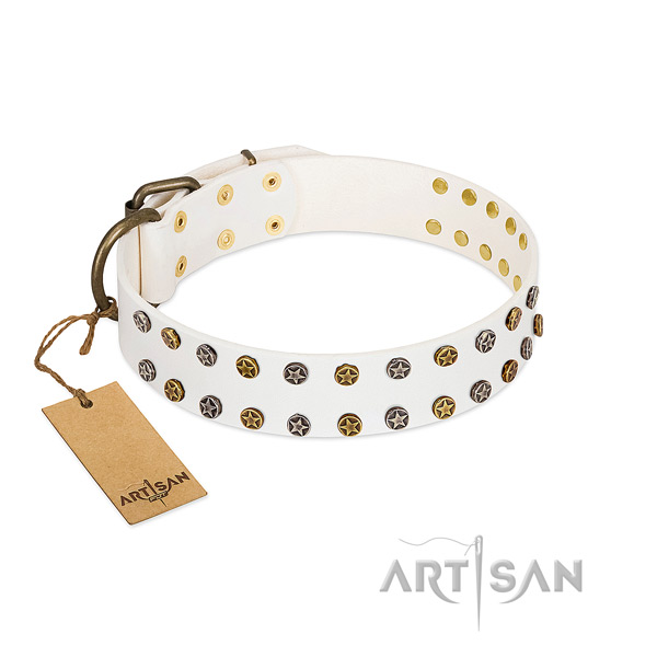 Trendy leather dog collar with durable embellishments