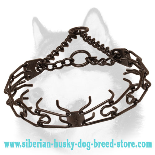 Pinch collar of corrosion-proof black stainless steel for badly behaved dogs