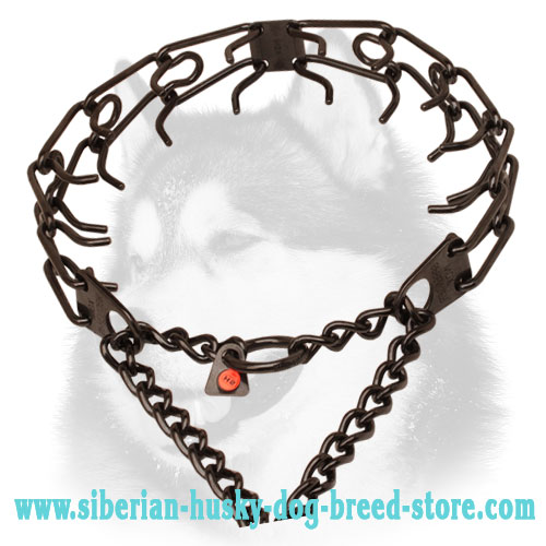 Pinch collar of black stainless steel for ill behaved pets