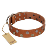 """Ancient Symbol"" Trendy FDT Artisan Tan Leather Siberian Husky Collar with Silver- and Gold-Like Studs"