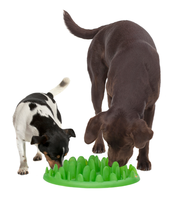 Two dogs eating from plastic Husky feeder