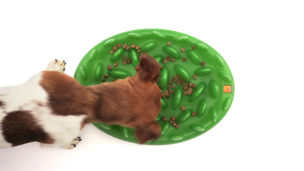 Green lawn imitation dog feeder