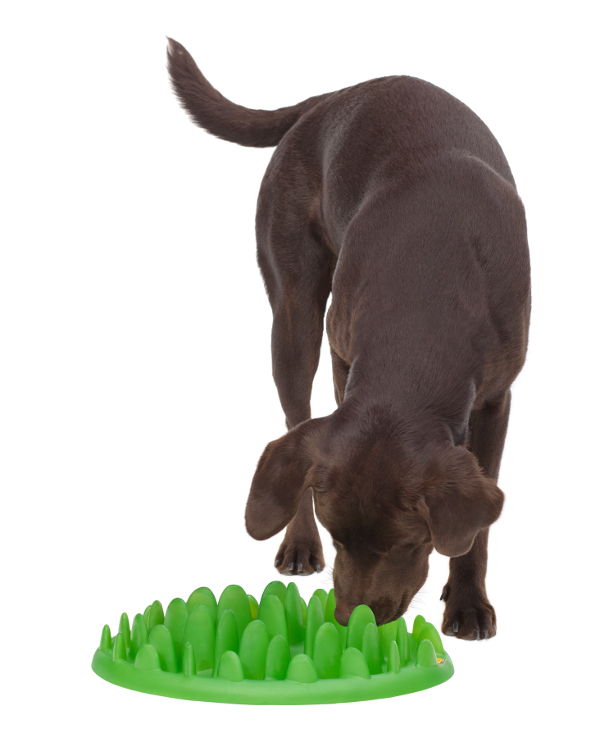Dog feeder for pet slow eating