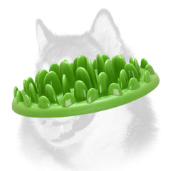 Siberian Husky pet feeder for safe dog eating